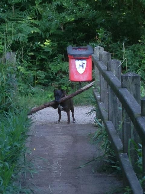 Popp's stick (3)